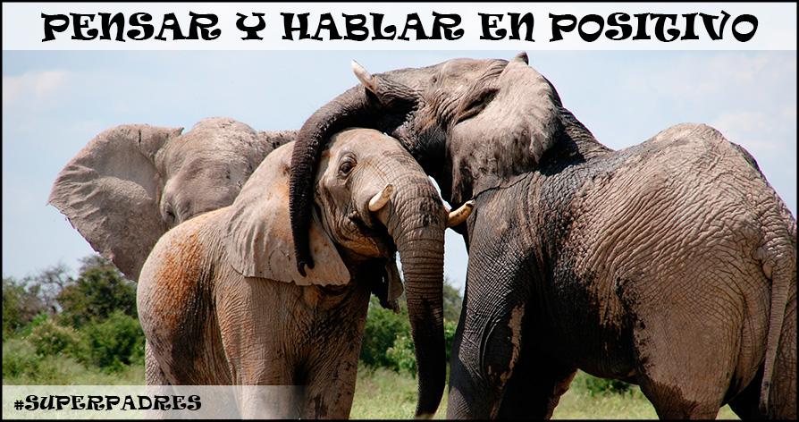no-pienses-en-elefantes